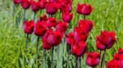 Многолетние растения, высадку которых необходимо осуществить осенью