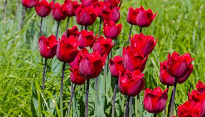 Самые неприхотливые и выносливые многолетние растения для украшения сада