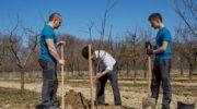 Какие работы весной в саду опытные садоводы считают бесполезными