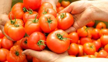 Самые неудачные сорта помидоров