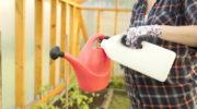 Выращивание томатов в теплице: выбираем урожайные сорта с крепким иммунитетом