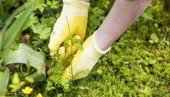 Как избавиться от сорняков на длительный срок