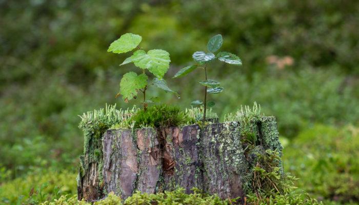Способы удаления мха и лишайников с плодовых деревьев