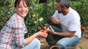 Как вырастить отличные томаты без вредных нитратов