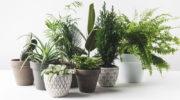 Комнатные цветы: растения, которые смогут выращивать даже лентяи