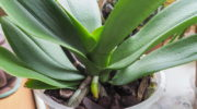 Как заставить орхидею цвести — простые способы, благодаря которым все получится
