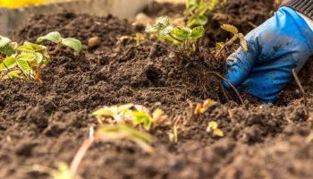 Как поддержать качество почвы в теплице — действуем круглый год